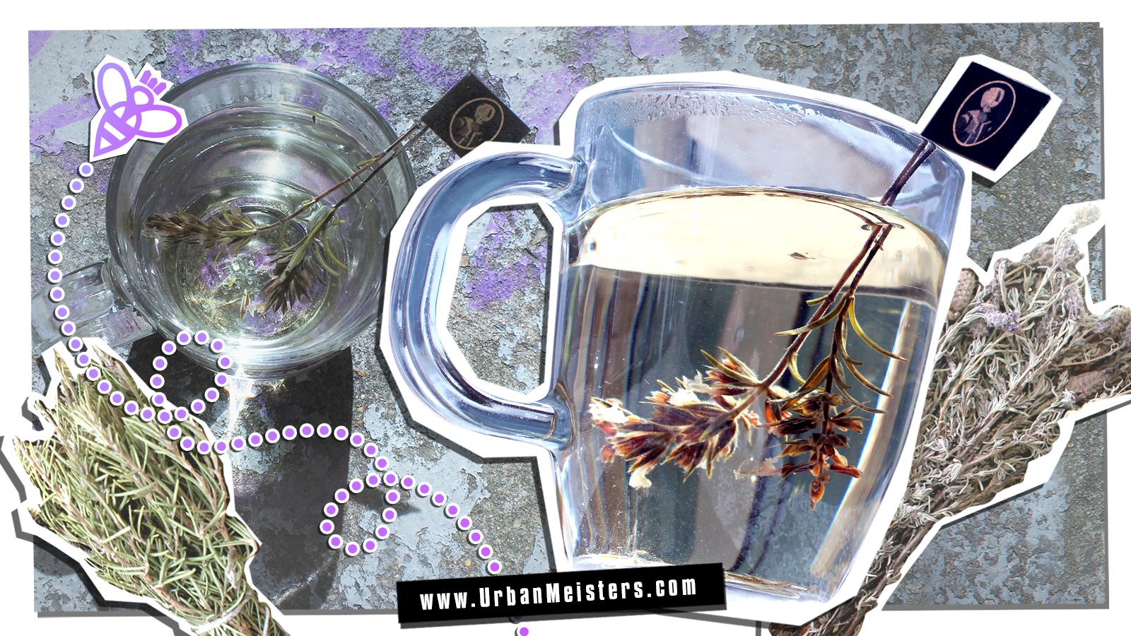 [SUPERFOODS] Herbal Tea Guide for Urbans by LE BÉNÉFIQUE