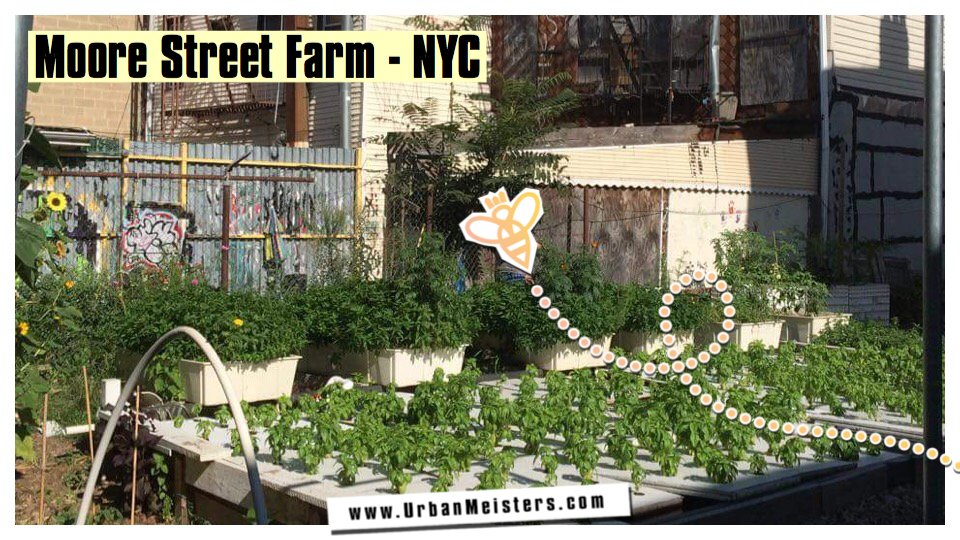 [GREEN NEW YORK GUIDE] Fish fuelled Urban Farming in Brooklyn!