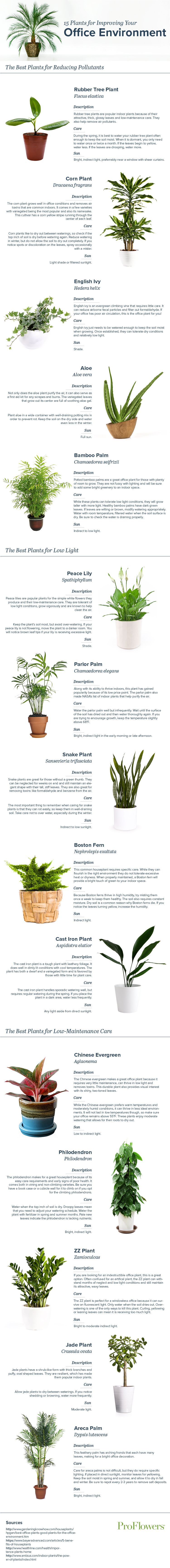 office-plants-infographic