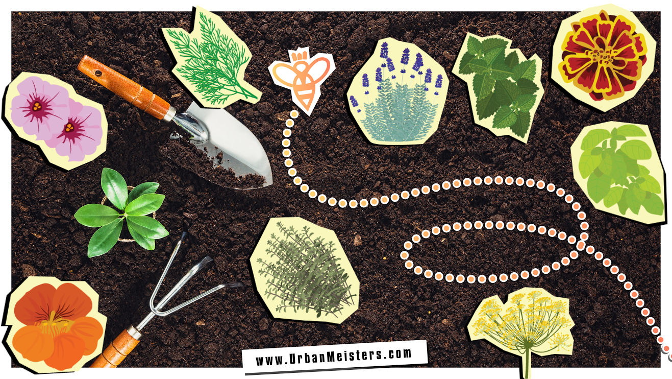 [GO-GREEN TIPS] How to grow an organic garden that's pesticide-free