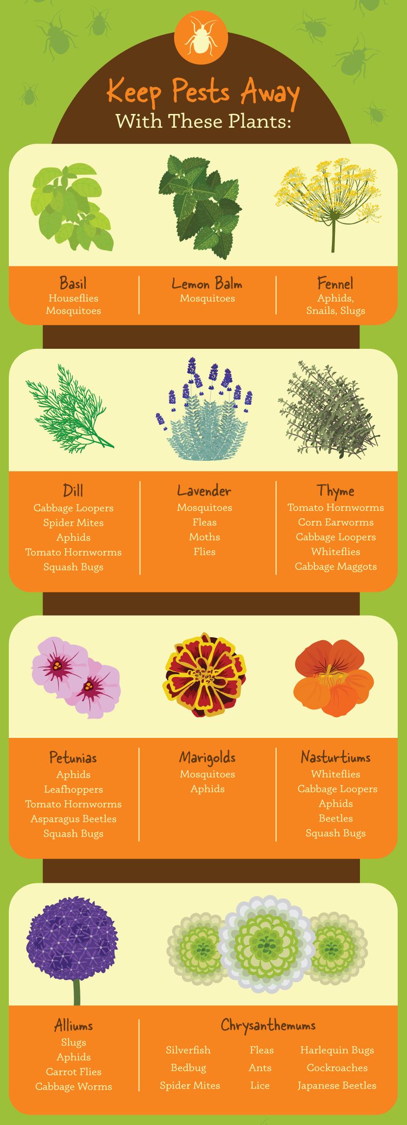 Organic garden pest repellers
