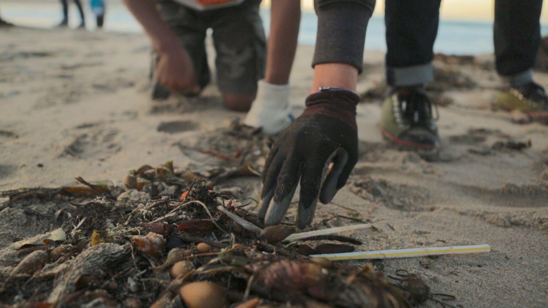 Monterey Beach Clean-up Straws